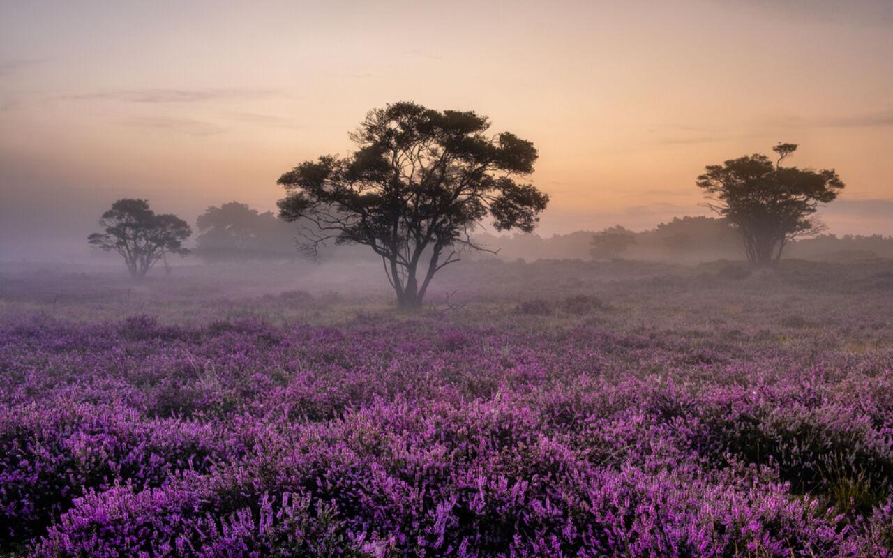 7 x Natuurgebieden waar je wil lopen