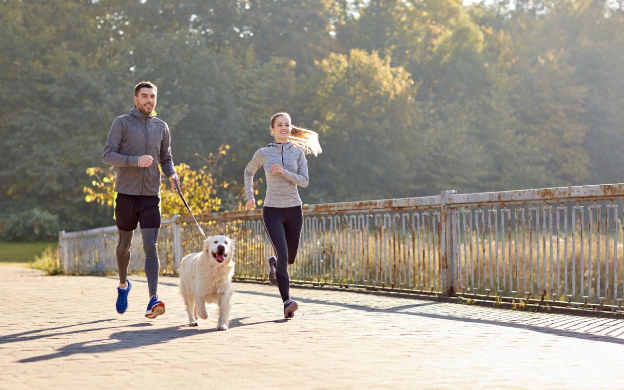 Hardlopen, het kan ook met de hond!