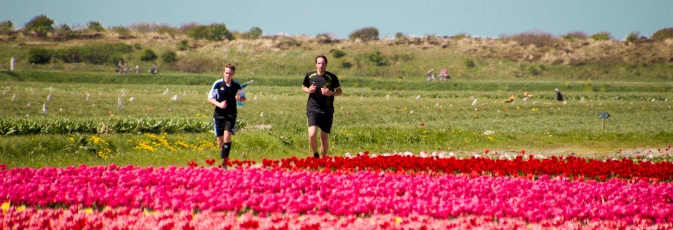 Crossen tussen de tulpenvelden door, een unieke ervaring!