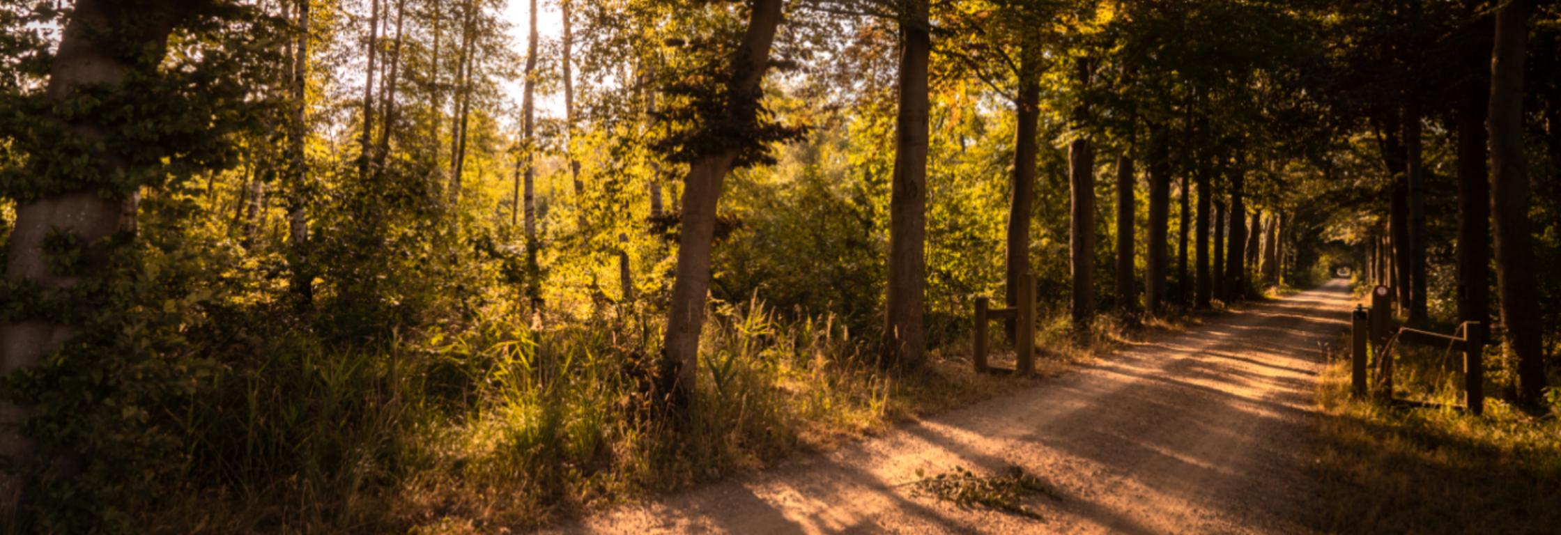 De favoriete hardlooproute van boswachter Hanne Tersmette
