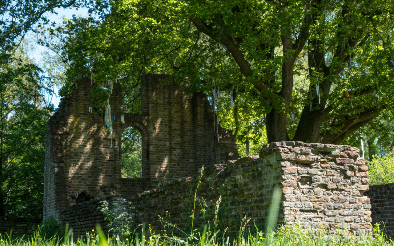 Ontdek natuurgebied Haterste Vennen bij Nijmegen
