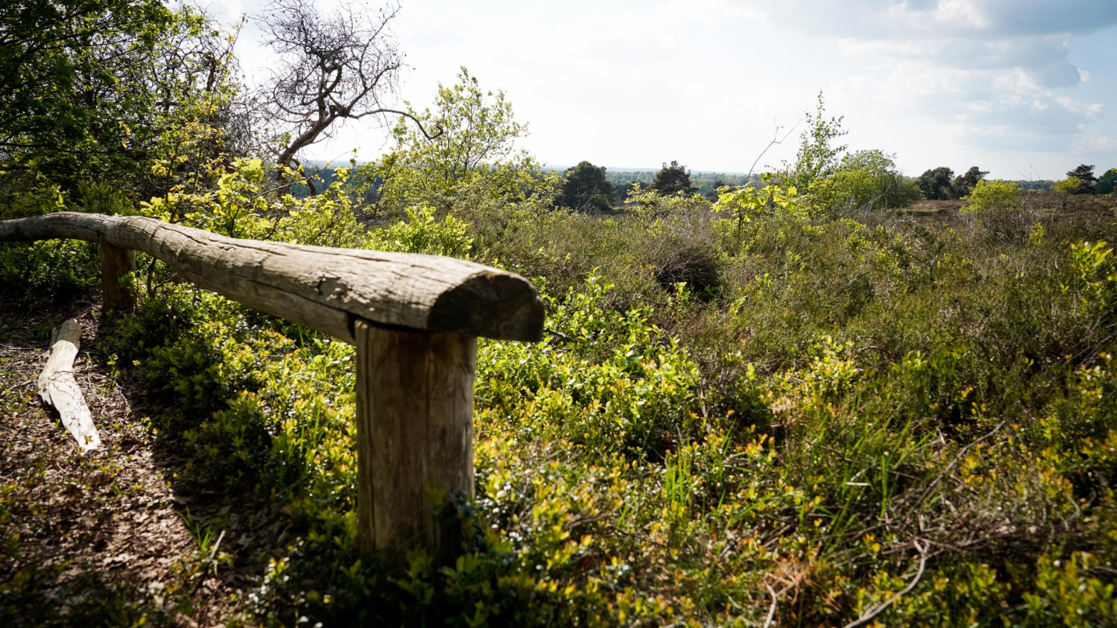 Ga hardlopen in Nationaal Park de Sallandse Heuvelrug